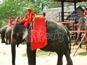 코끼리트래킹