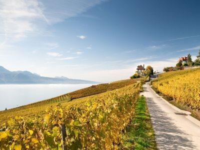 ■ 아름다운 자연경관을 가진 스위스와 예술가들이 사랑한 남프랑스의 조화로운 만남
