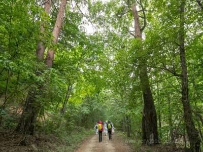 금강소나무 숲길 탐방로