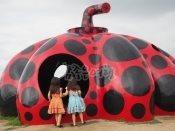 나오시마 빨간호박