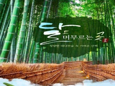 [아라시야마 3일] 대나무숲의 청량함