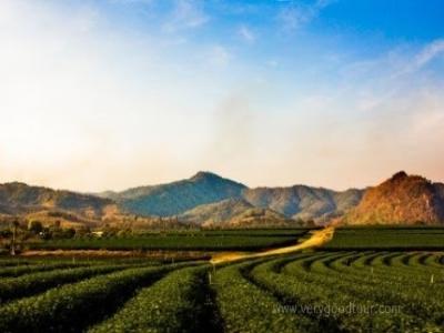 [치앙마이5일]_[고산로지1박-고산족체험]_치앙라이(백색사원+골든크라이앵글)or도이인타논 국립공원