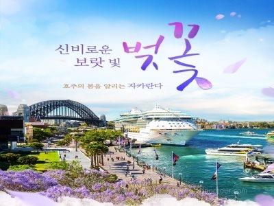 [시드니 여행의 정석] 호주(시드니) + 블루마운틴/포트스테판 6일
