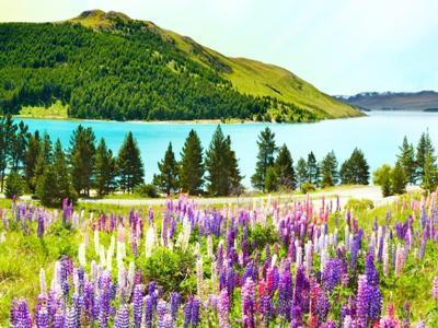 [느리지만 풍성한 뉴질랜드] 뉴질랜드 남북섬(허미티지 호텔 1박+퀸스타운 자유시간) 9일