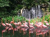 싱가폴 주롱새공원