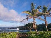 하와이 8