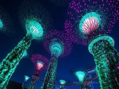 [자유일정이 없는] 싱가포르 5일 #아쿠아리움/리버사파리/루지